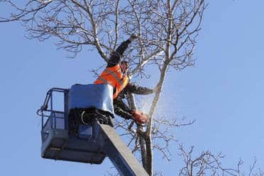 crane tree removal service Raleigh